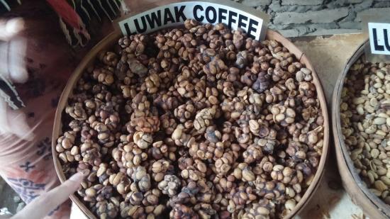 the-original-luwak-coffee