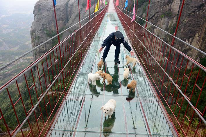 Shiniuzhai_Dogs&Deck