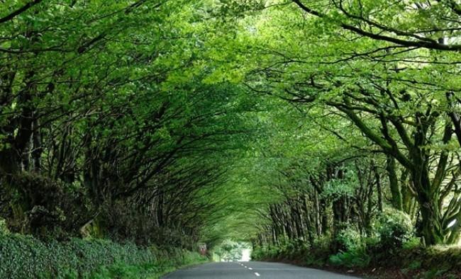 Англия, проселочная дорога в Милтон-Эббот