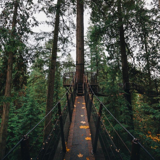 Anyone up for some exploring? These Vancouver woods seem likehellip