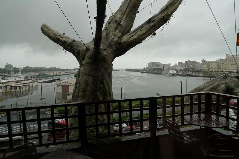 дерево4