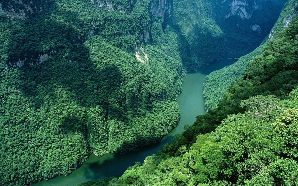 Картинки по запросу Пляжи Амазонки