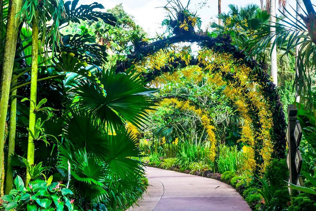 singapore-botanic-gardens -2
