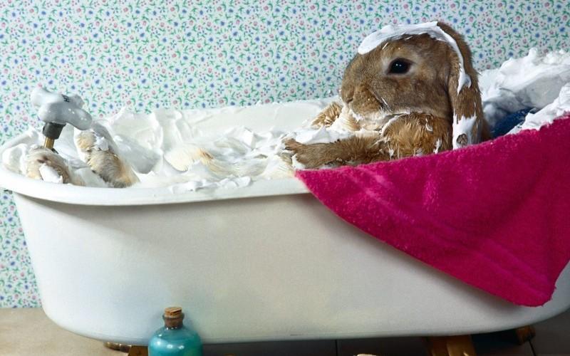Bunny-Bubble-Bath-e1456329444124