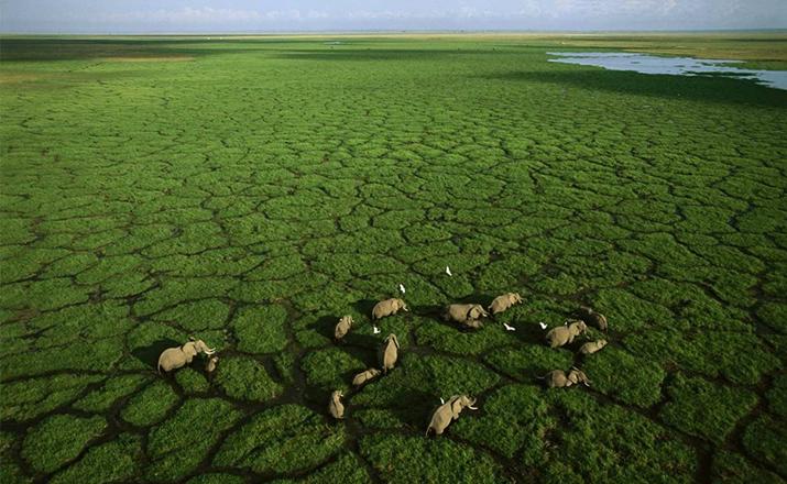Национальный парк «Амбосели», Кения