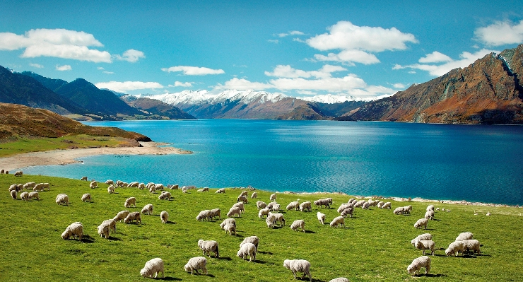 laneve-wool-farm-in-new-zealand