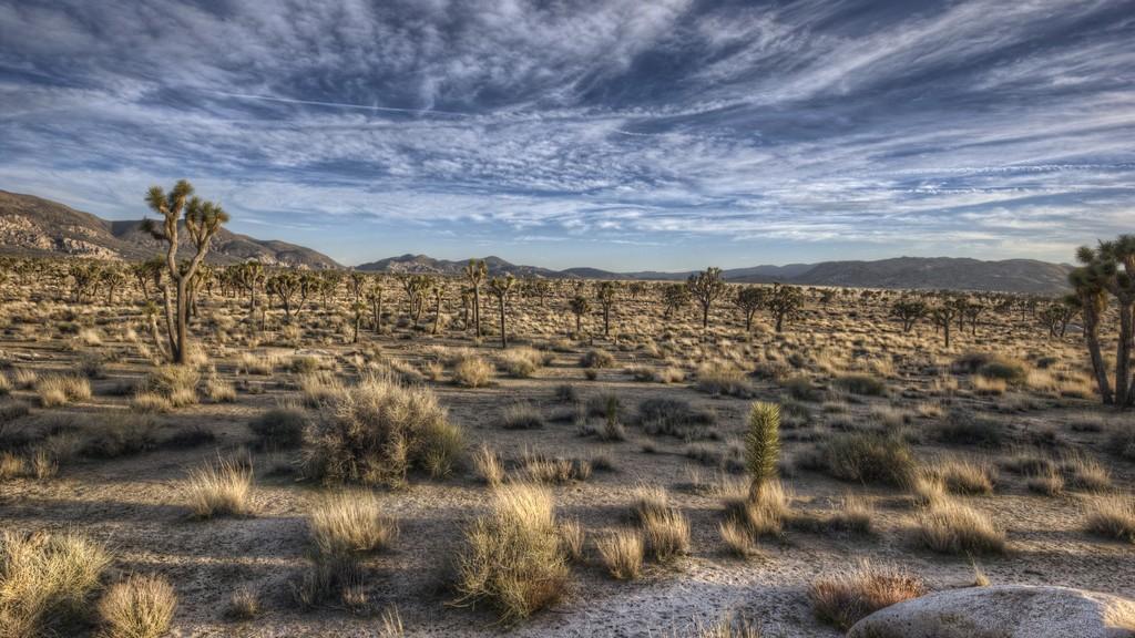 пустынякалифорнии