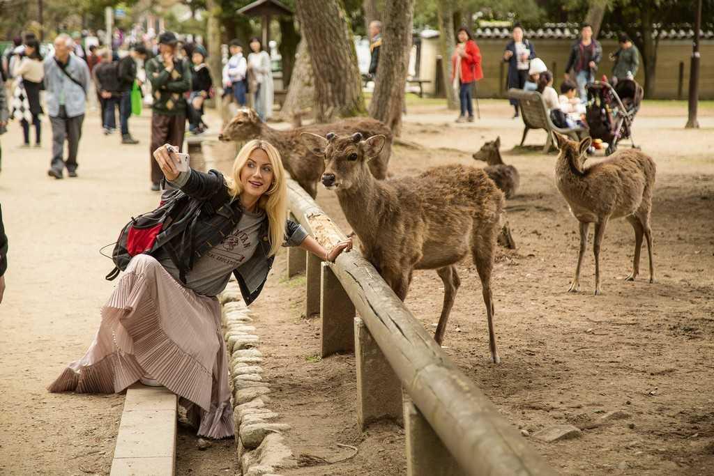 Парк с оленями в Наре, Осака