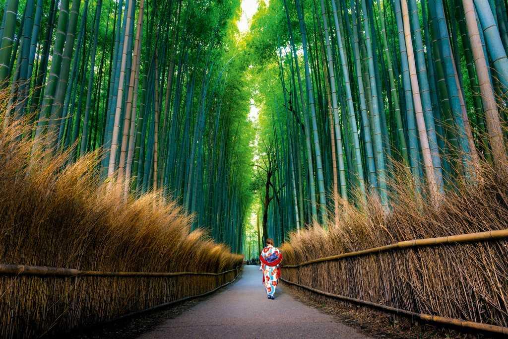 Бамбуковый лес, Киото