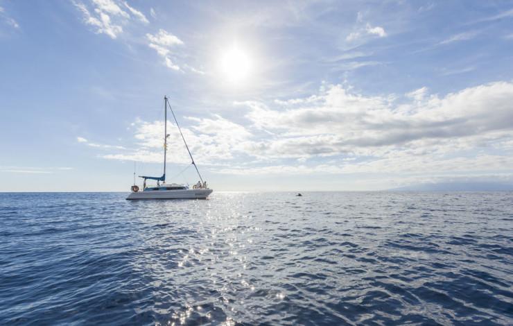16-avistamiento-cetaceos-barco