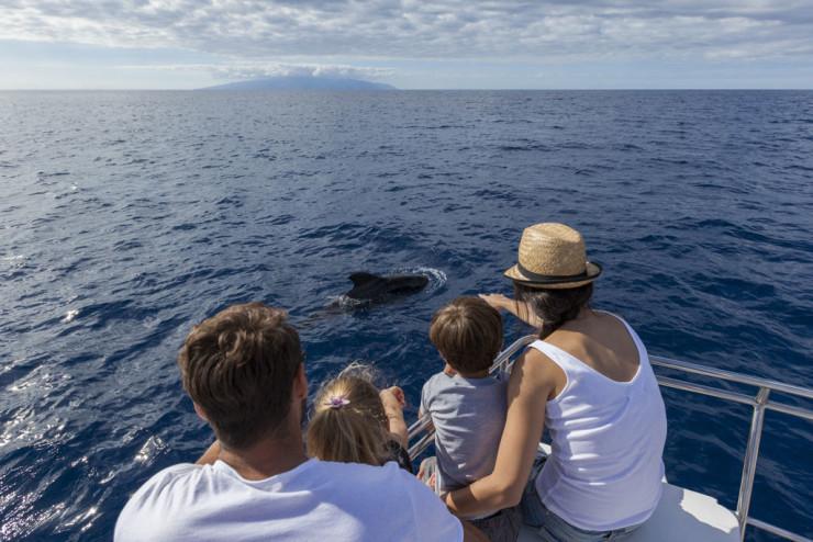 17-avistamiento-cetaceos-familia