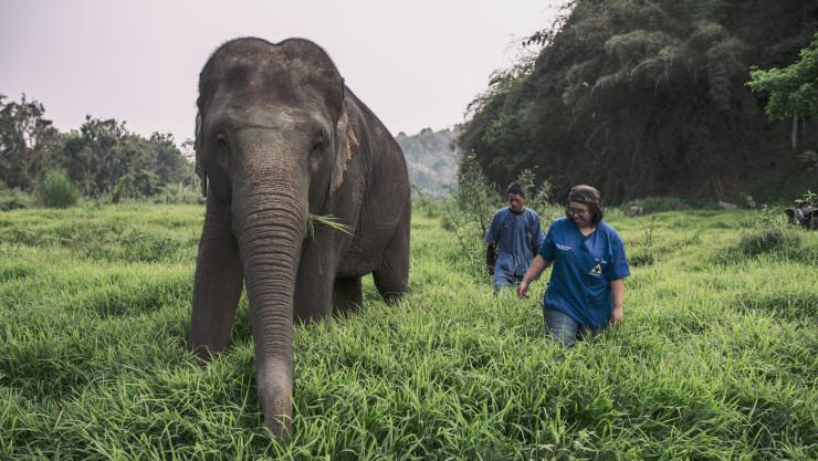 Фото: Anantara Golden Triangle Elephant Camp & Resort (GTAEF).