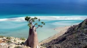 1-Природа острова Сокотра. Йемен