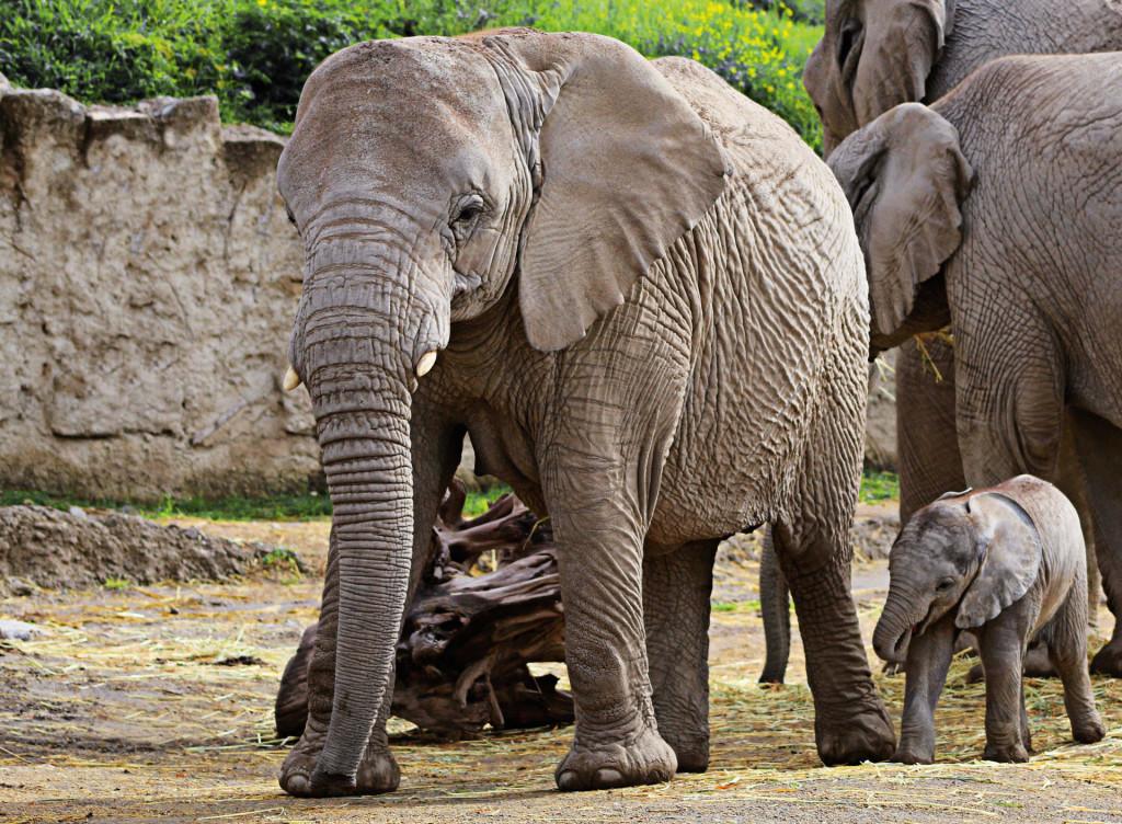 Зоопарк Africam Safari