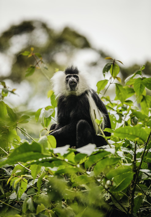 NH_OO_Activities_Colobus_Monkey_Trek_2394_MASTER