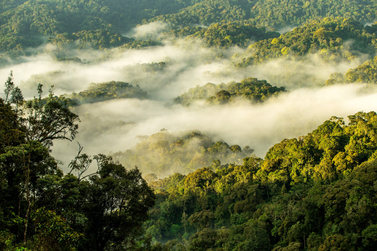 oo_nyungwe_house_landscape_sunrise_mist_at_nyungwe_forest_28_9_2017_LR