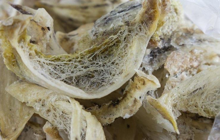 Так выглядит гнездо салангана после первой очистки. Фото: fitexpert.biz