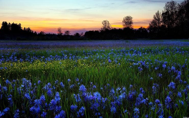 Украинская степь. Фото: yandex.com .
