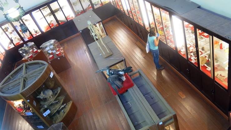 Museo de Historia Natural Фото: Diario Correo