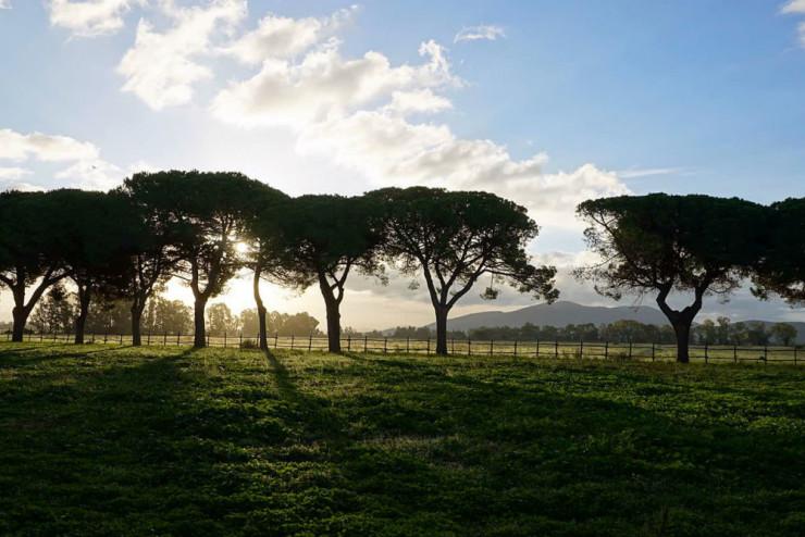 Эко-ферма Tenuta San Carlo, Италия Фото: TripAdvisor