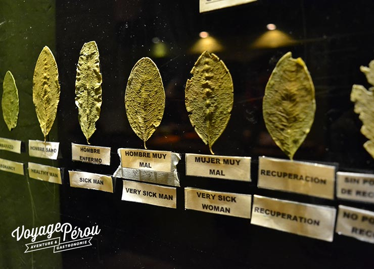 Museo de la Coca Фото: Voyage Pérou