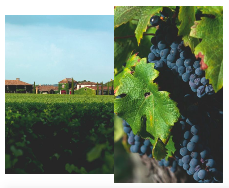 Винодельни в Бордо обязательны к посещению, если любите хорошее вино