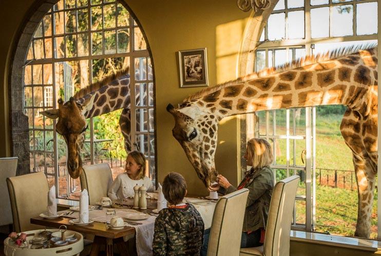 Типичный завтрак в Giraffe Manor