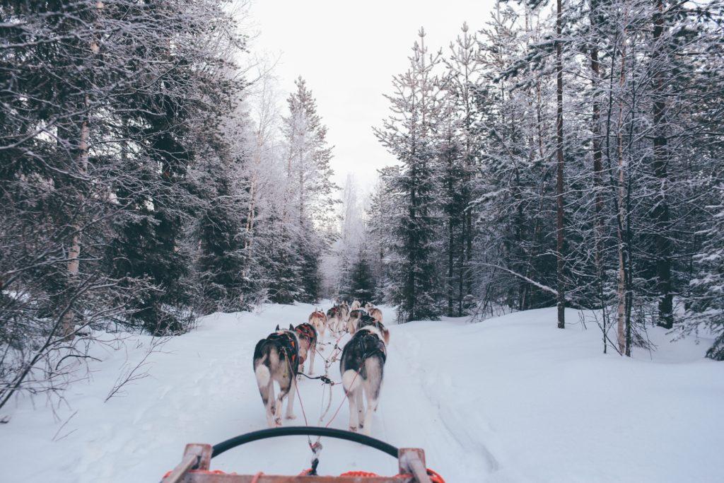 Зима, Финляндия, Санта Клаус, собачья упряжка, сани
