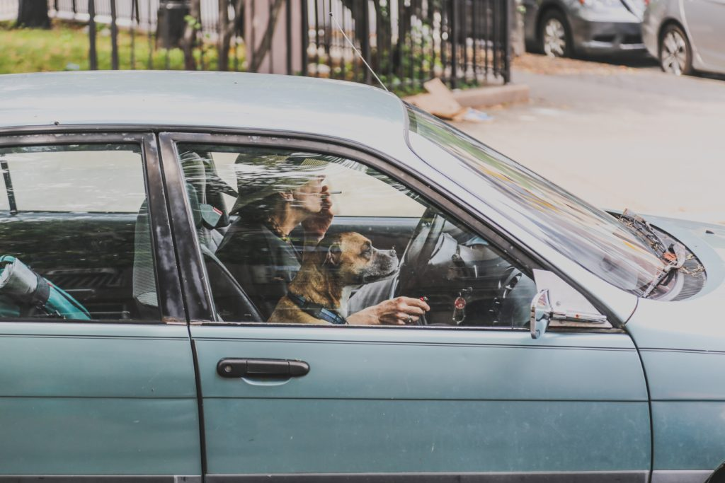 собака, машина, собака в машине, uber pet, uber с животными