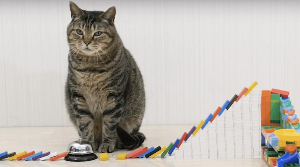 Коты и домино