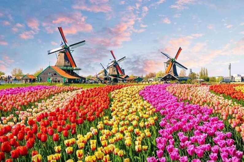 Сотрудники Королевского парка цветов запустили онлайн-экскурсии