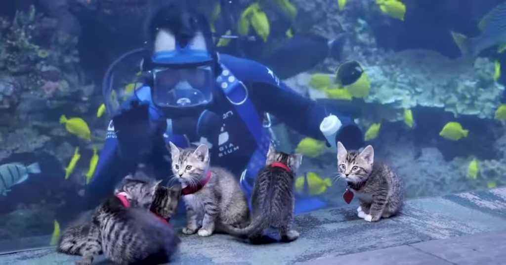 Больше всего котятам понравилось смотреть и играть с разноцветными рыбками