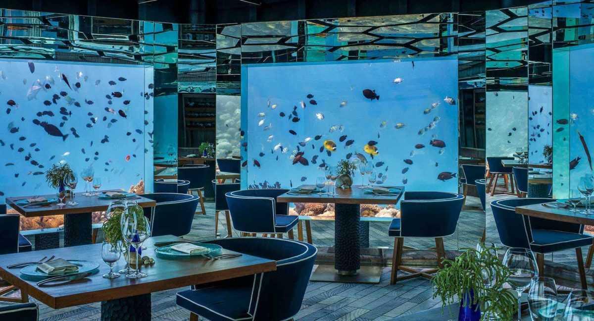 подводный мир онлайн, Мальдивы, рифы