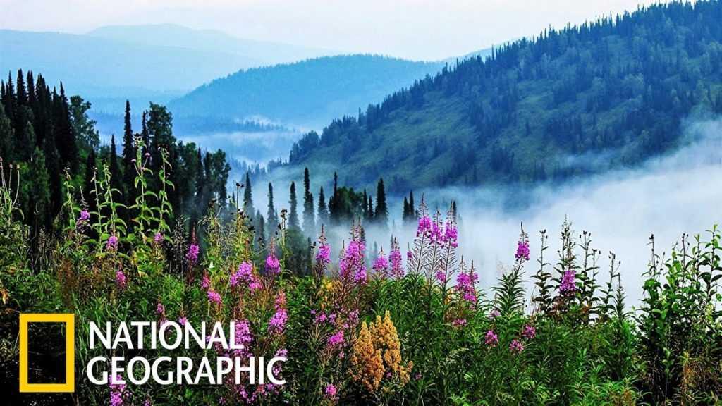 National Geographic запустили образовательную платформу «NatGeoHome»