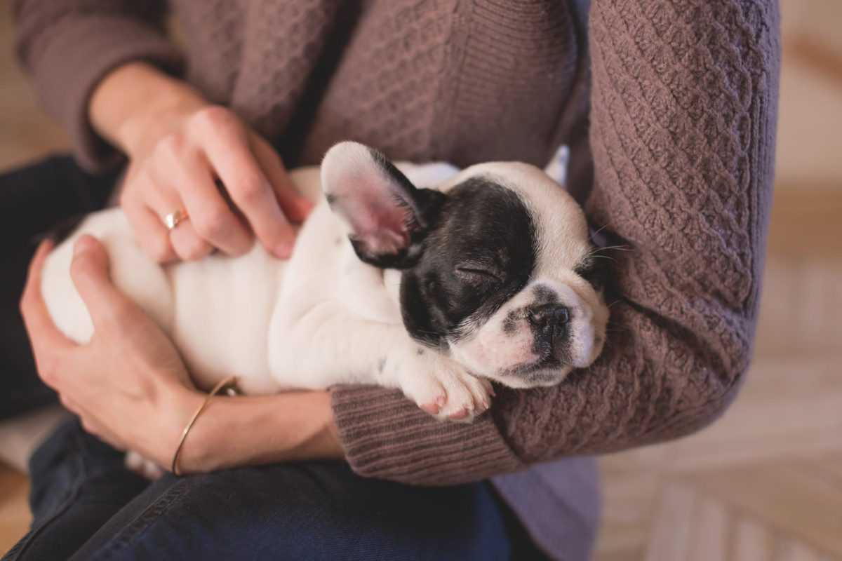 Собаки и коты помогают веселее пережить дни изоляции
