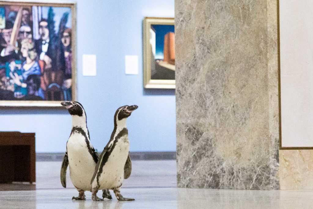 Для пингвинов это был особенный день