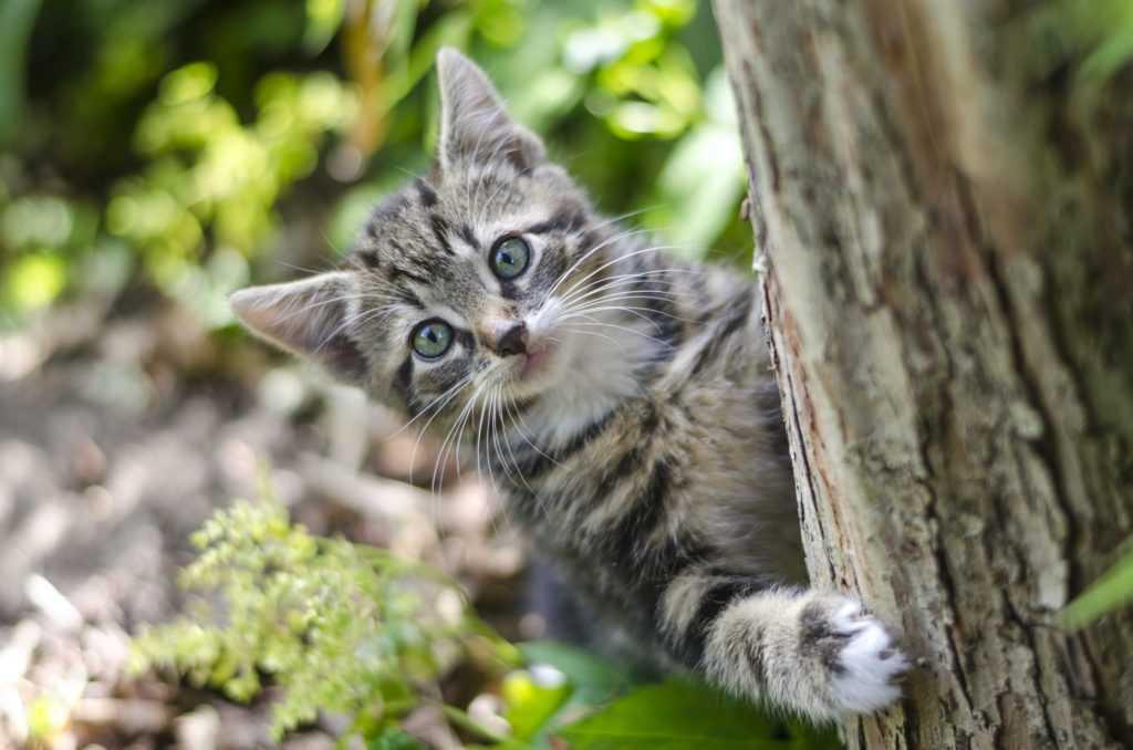В США пройдет первый кошачий кинофестиваль