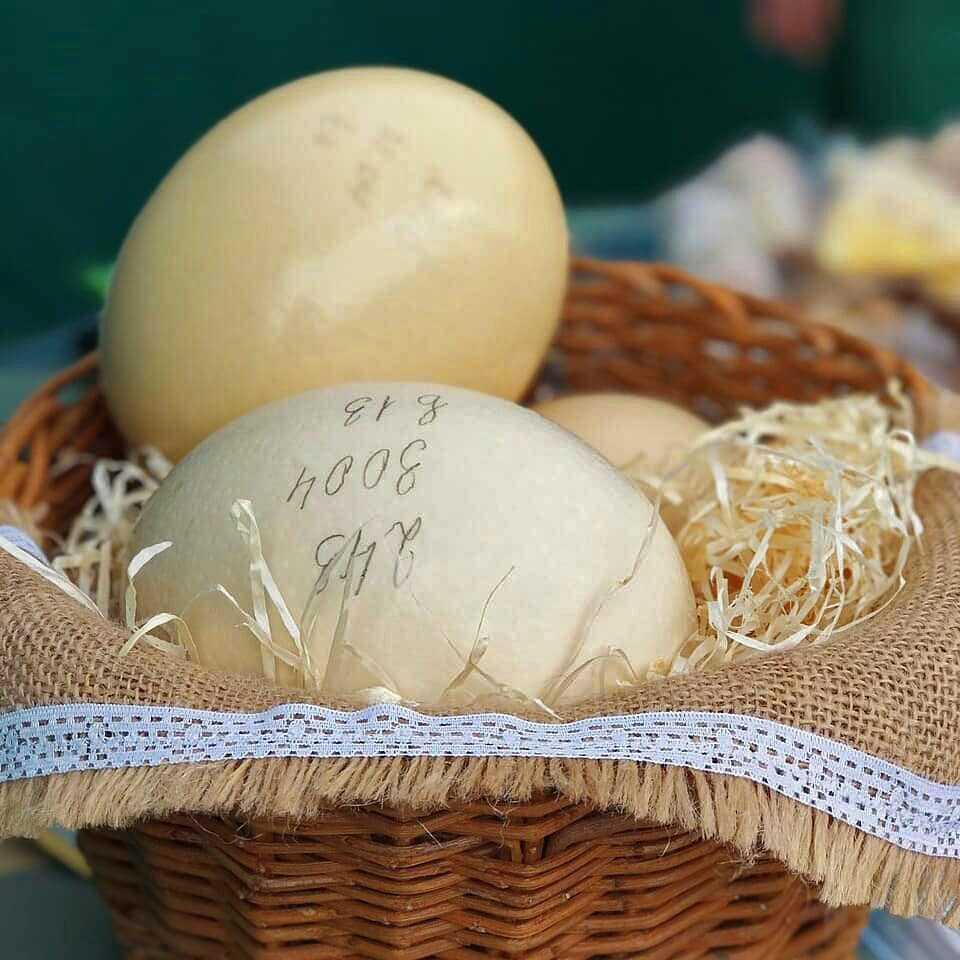 Страусиное яйцо - Долина Страусов - Гастрономические туры Украина