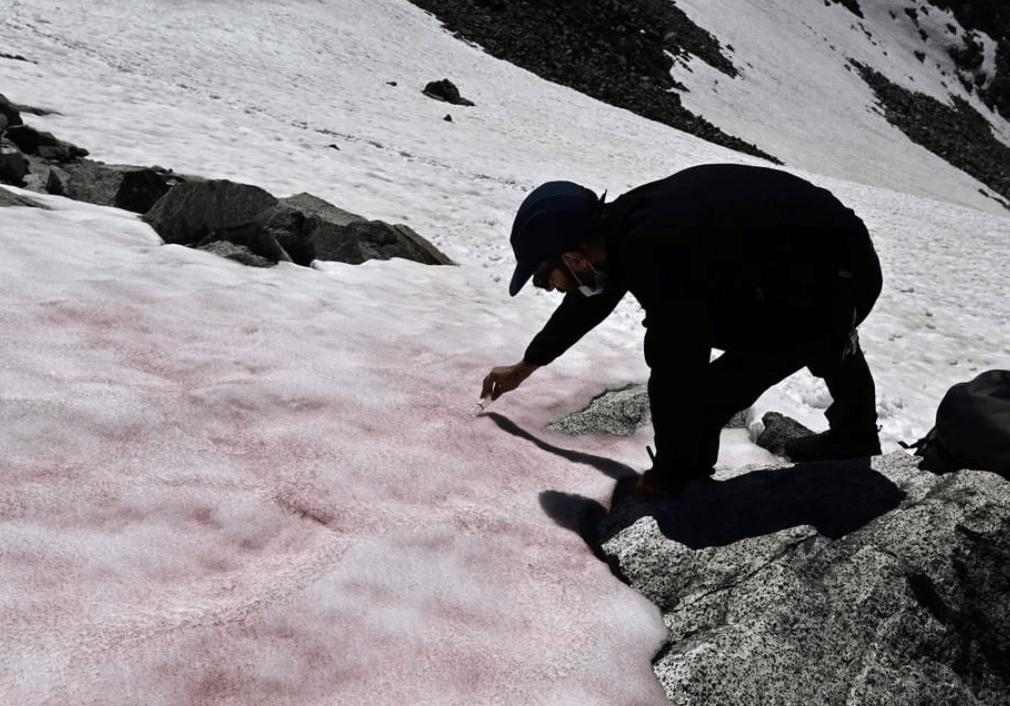 В Итальянских Альпах выпал розовый снег