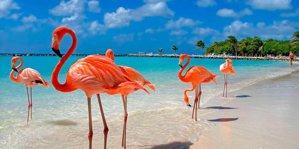 Доминикана обновила правила приема для туристов