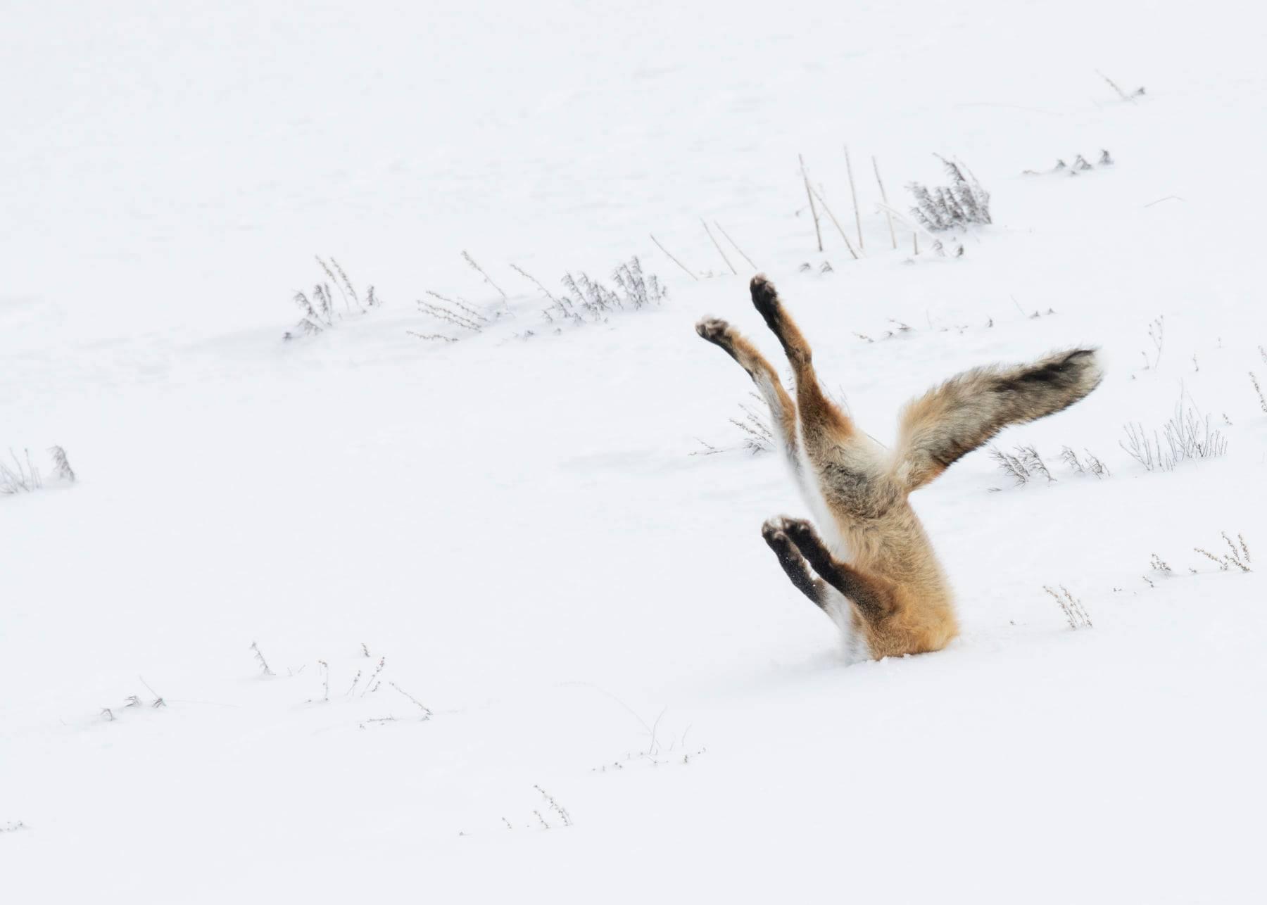 Лучшие смешные снимки дикой природы 2020