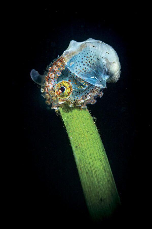 Through Your Lens Лучшие подводные фото