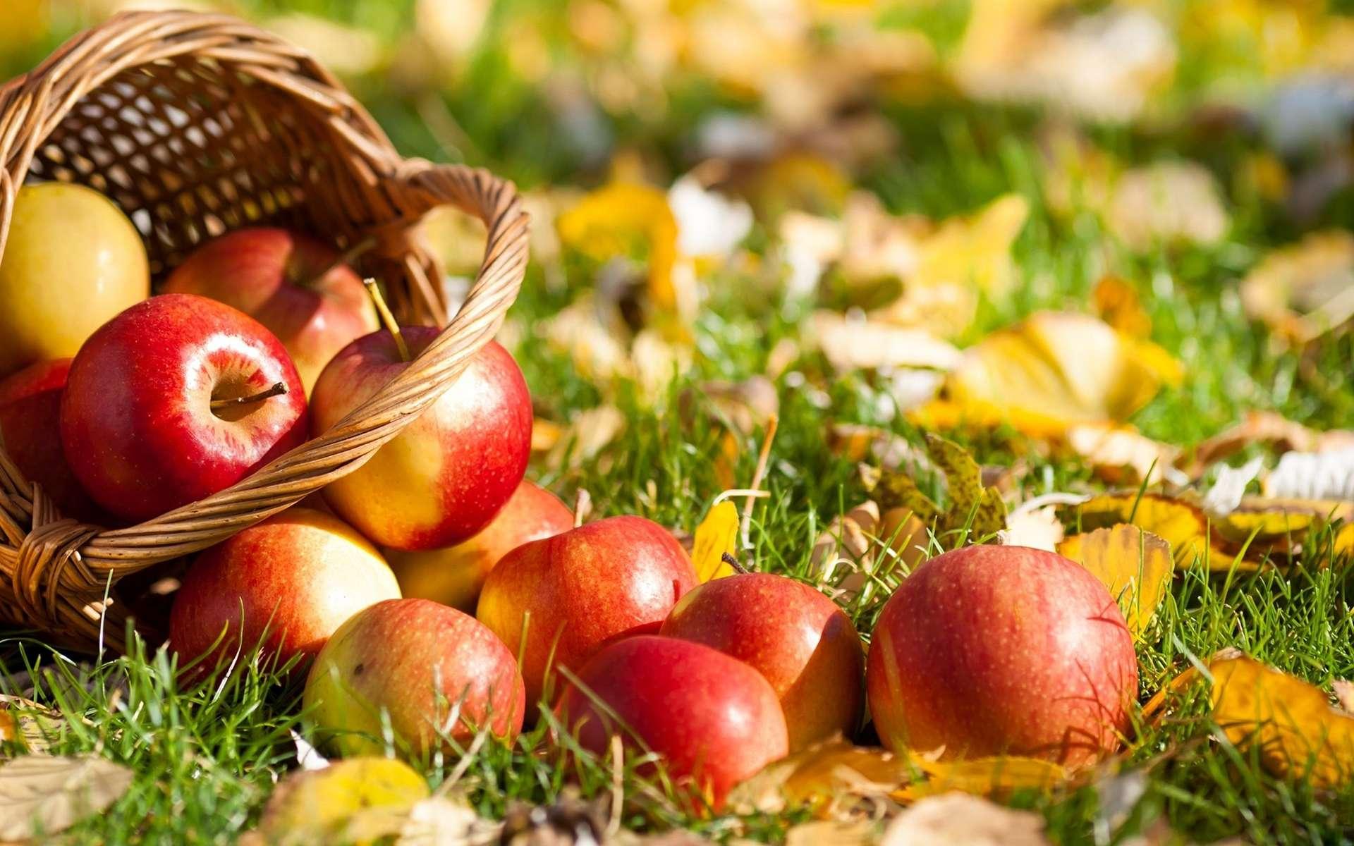 Осенний сезон Яблочный фестиваль Applefest