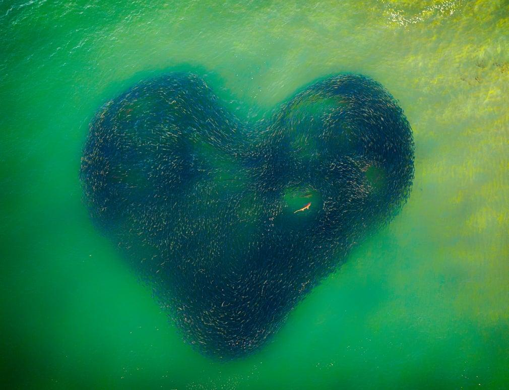 «Любящее сердце природы»