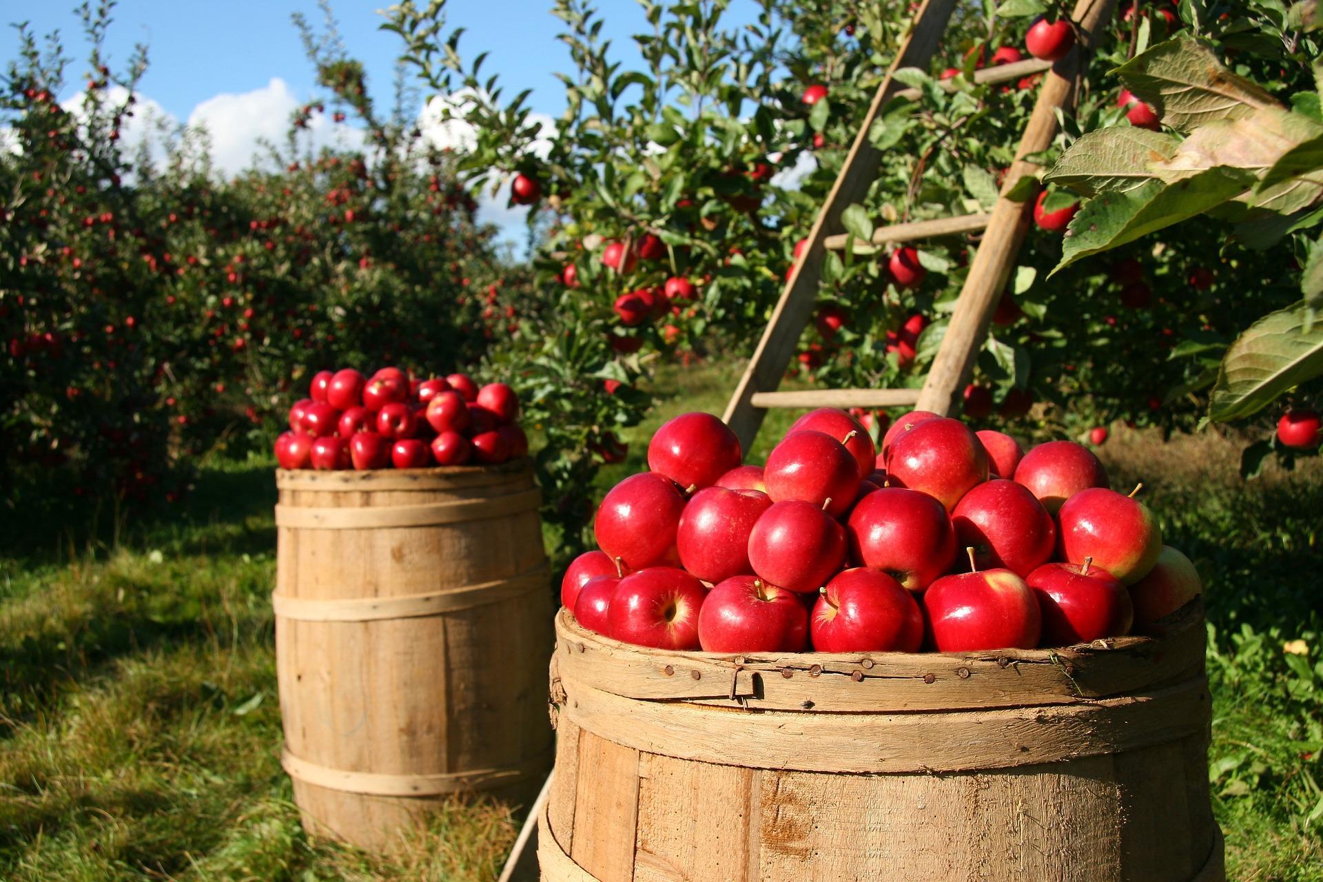 Яблочная Нормандия