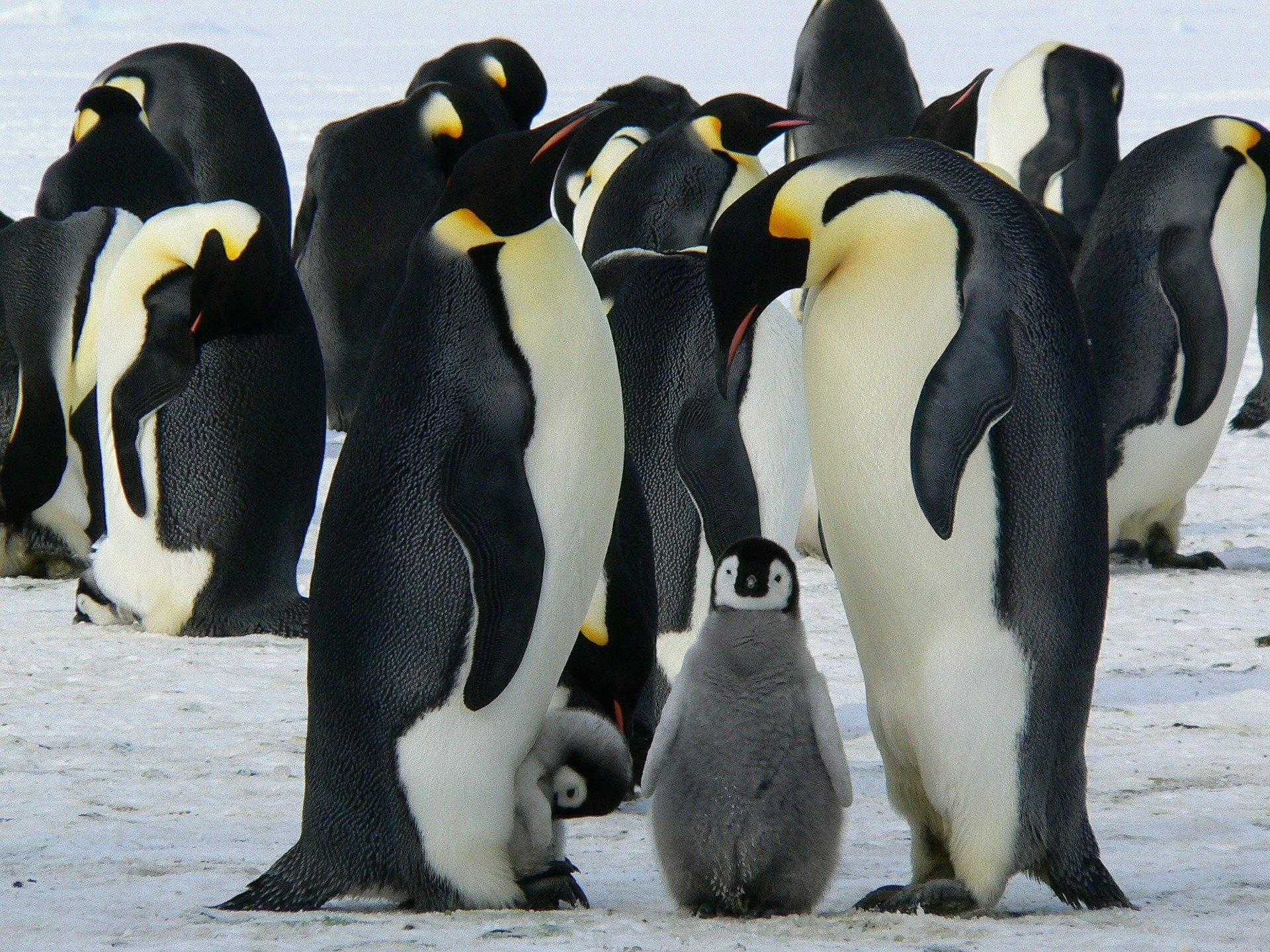 В Украине открыт набор желающих для экспедиции в Антарктиду