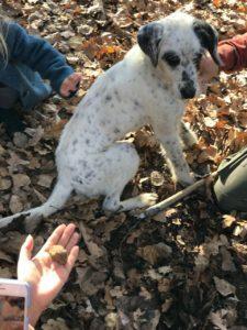 охота на трюфель собака