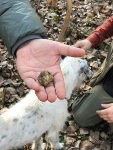 Охота на трюфель в Альбе