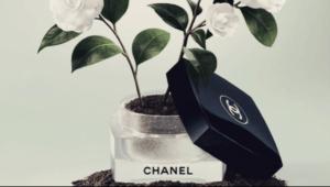 Модный дом Chanel открыл выставку растений в Париже