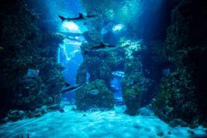 океанариум Монако